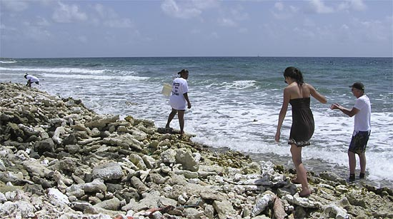 whelking Anguilla beaches