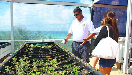 anguilla jammin aquaponics garden