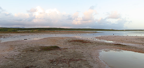 bird watching in anguilla at long pond