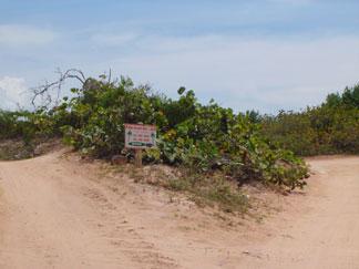 palm grove anguilla