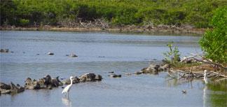 Anguilla National Trust bird watching
