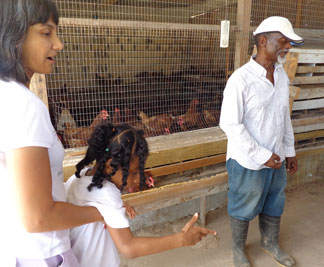 visiting a chicken farm in anguilla