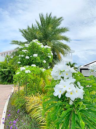 Garden at Bar Soleil