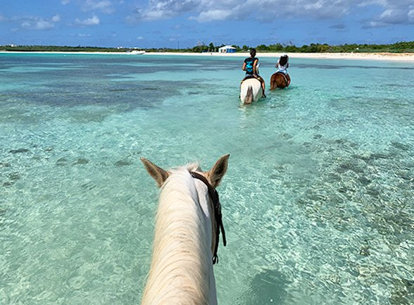 anguilla horseback riding
