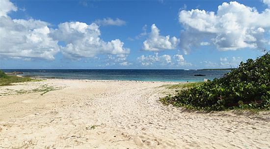 the beach at junks hole