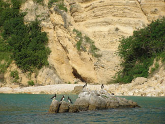 Anguilla beaches, Little Bay, brown booby