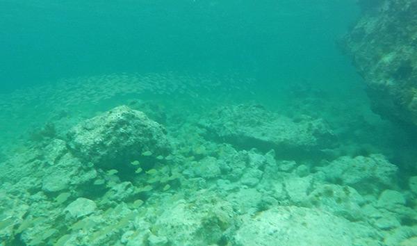 snorkeling by the beautiful rocks of little bay