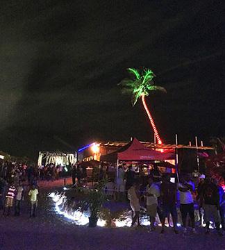 palm trees at elemental anguilla