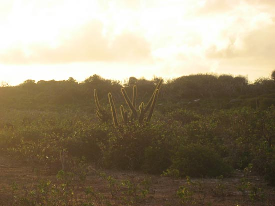 Anguilla Desert