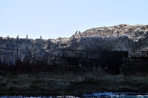 boobie birds sun bathing on cliffs of little scrub