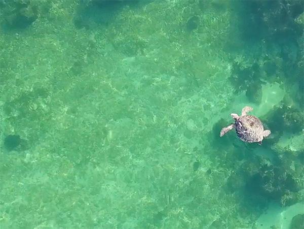 sea turtle at champagne shores villa
