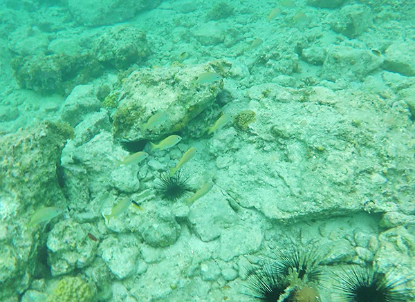 snorkeling at little bay