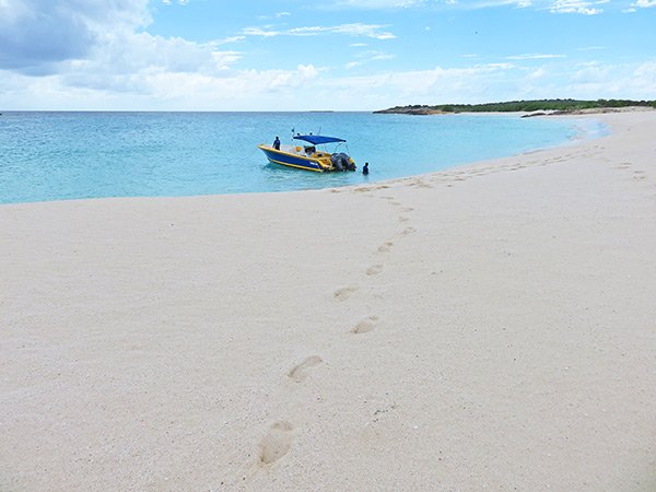 beautiful dog island anguilla