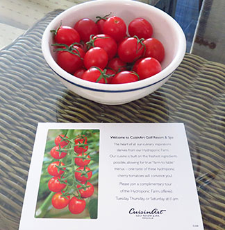 hydroponic tomatoes welcome to cuisinart