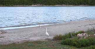 Anguilla salt ponds