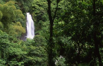 lush Dominica