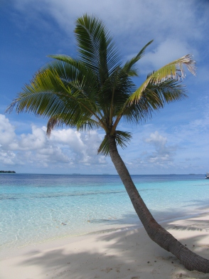 This palm tree needs a couple of friends! I think my wife and I can fit the bill!