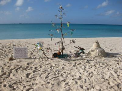 Our Anguilla Christmas Tree!
