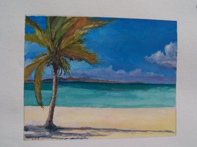 Anguilla Palm